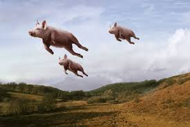 pig can fly2