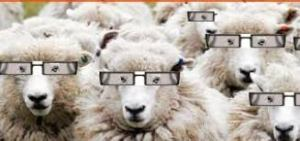 sheep who see