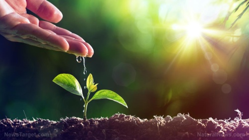 Plant-Water-New-Growth-Seedling-Concept-Life